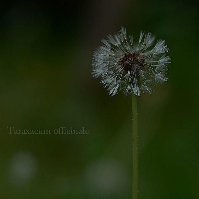 #東京カメラ部 #花#花が咲い た