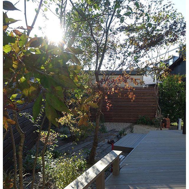素敵な#高原が出来ました#エコアコールウッド #庭 #garden