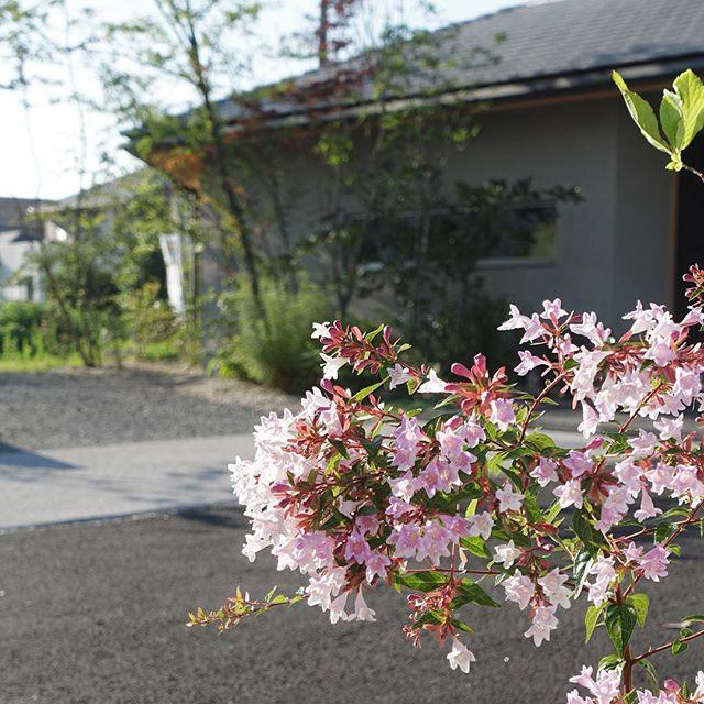 ご無沙汰しております。良風の庭の#撮影 に伺いましたこちらからご覧ください。http://www.#houzz.com/jp/professional2/883040/ts-garden-square-coltd#アベリア #アベリアエドワードゴーチャー