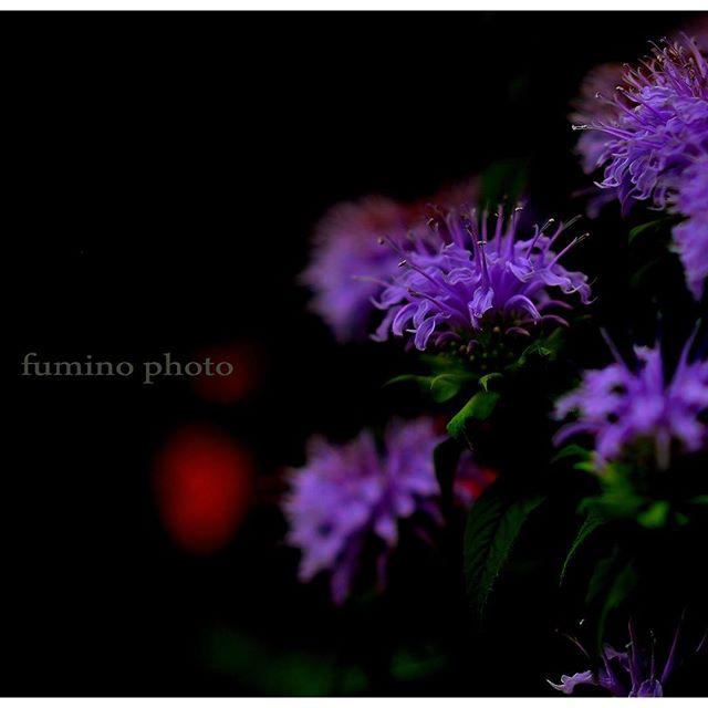 小さな小花を沢山あしらえ 美しい姿を見せてくれる。様々なおもてなし心に積み重ねる思いで#記憶。積み重ねがいつか忘れられないよう記録。残しておきたいそしてまた 会いに来るね。また和える日まで。雲は#Facebookでしたね。#写真好き
