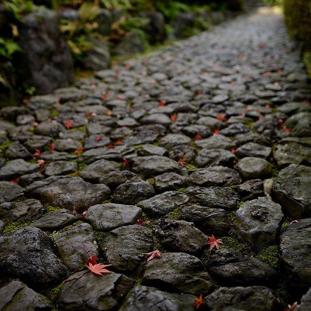 コツコツと音が聞こえてきそうな石畳 もう間もなく紅葉 も終わってしまう。素敵な秋の散歩道。#写真好きな人と繋がりたい #どうだん亭 #満天星#紅葉#Tokyocameraclub#東京カメラ部