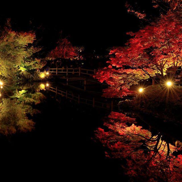 そろそろ紅葉も終わりですね。冬将軍の到来あまり来ていただきたくない将軍さま。#紅葉 #鏡池 #写真好きな人と繋がりたい #tokyocameraclub