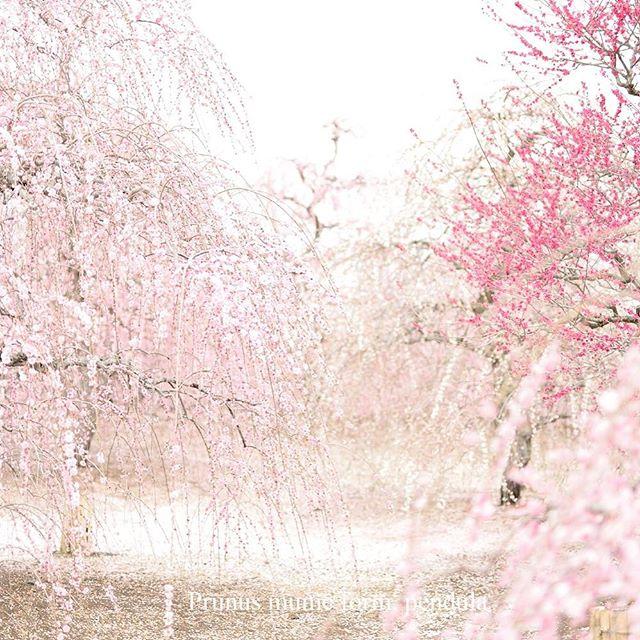 #鈴鹿の森 #この同じ空のもと僕らはigでつながっている #撮影 #photographer #photo #phos_japan #写真好きな人と繋がりたい #植物図鑑 #植物 #ザ花部 #植物が好き #tokyocameraclub#東京カメラ倶楽部