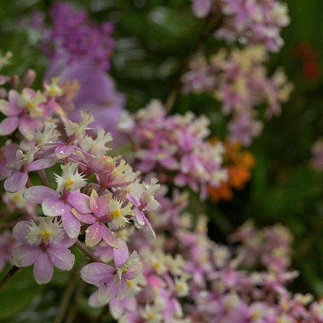 #写真好きな人と繋がりたい #写真撮ってる人と繋がりたい #photo #photo_jpn #photographer #nikon #この同じ空のもと僕らはigでつながっている #植物 #植物図鑑 #植物が好き #植物が好きな人と繋がりたい #胡蝶蘭 #写真を撮るのが好きな人と繋がりたい #はなまっぷ #はな