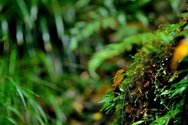 #はなまっぷ #写真好きな人と繋がりたい #写真を撮るのが好きな人と繋がりたい #植物図鑑 #植物が好きな人と繋がりたい #photo #photographer #phos_japan #tokyocameraclub #東京カメラ部 #フォトブートキャンプ #フォトブートキャンプ04 #nikon #ザ花部