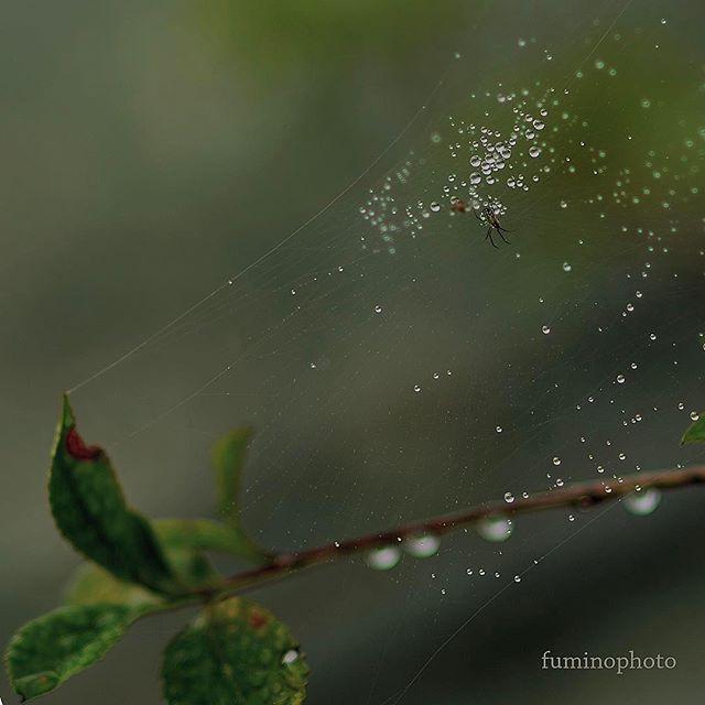 #ザ花部 #nikon #くも #クモ #東京カメラ部 #はなまっぷ #photos #photographer #photography #phos_japan #フォトブートキャンプ04 #フォトブートキャンプ #写真好きな人と繋がりたい #写真撮ってる人と繋がりたい #植物 #植物図鑑 #植物が好き #植物が好きな人と繋がりたい#wp_japan