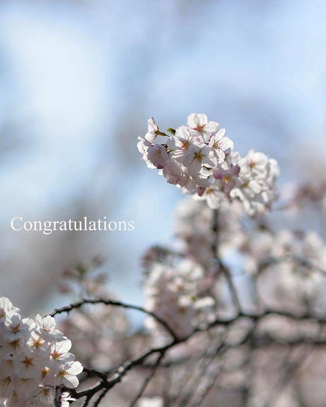 #photography #phos_japan #tokyocameraclub #東京カメラ部 #入園式 #はなまっぷ #wp_桜2017 #wp_japan #congratulations #植物 #植物のある暮らし #植物が好きな人と繋がりたい #ザ花部 #フォトブートキャンプ