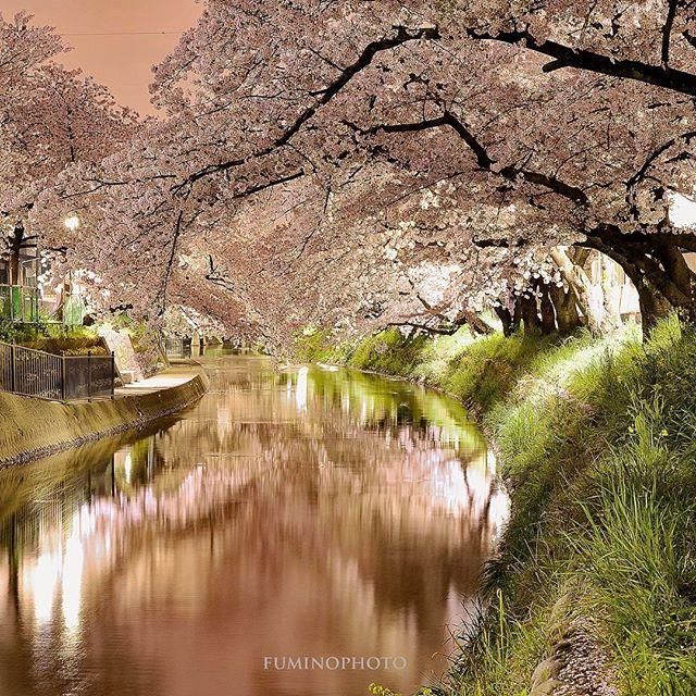 #フォトブートキャンプ07 #植物のある暮らし #はなまっぷ#フォトブートキャンプ #東京カメラ部 #tokyocameraclub #写真好きな人と繋がりたい #写真撮ってる人と繋がりたい #写真を撮るのが好きな人と繋がりたい #wp_japan #wp_桜2017 #植物が好き#nikon