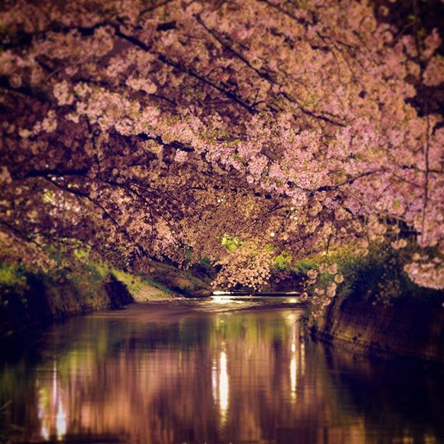 今日は気持ちのいい日和でしたね。#桜 も、もう終わりそうですが気温が低いので何とか頑張ってくれています。次はフジの写真でいっぱいになりますね。#wp_桜2017 #写真好きな人と繋がりたい #写真撮ってる人と繋がりたい #東京カメラ部 #tokyocameraclub #photographer #photography #nikon #phos_japan #wp_japan #写真を撮るのが好きな人と繋がりたい
