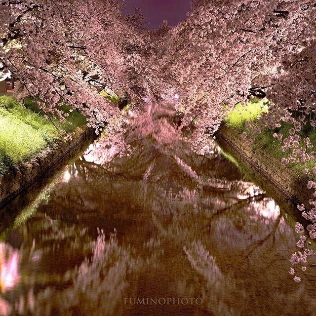 #スクエア構図は難しい#はなまっぷ #photographer #植物が好き #植物のある暮らし #ザ花部 #写真好きな人と繋がりたい #写真撮ってる人と繋がりたい #tokyocameraclub #東京カメラ部 #wp_japan #wp_桜2017 #phos_japan #photography #photo#フォトブートキャンプ