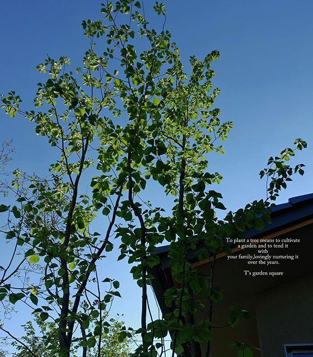 #写真好きな人と繋がりたい #写真撮ってる人と繋がりたい #phos_japan #nikon #はなまっぷ #photography #photographer #フォトブートキャンプ #植物 #植物が好き #植物のある暮らし #雑木の庭 #雑木林