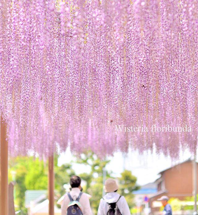 なかよし#special_flower_collections #special_spot_ #special_group_ #写真好きな人と繋がりたい #写真撮ってる人と繋がりたい #植物 #植物が好き #rainbow_petals #japan #wu_japan #photo_jpn #phos_japan #photography #nikon #super_asia_channel #はなまっぷ #inspiring_shot #instagram #instafollow #love_garden #instagrammer #revolutionofconsciousness #revolutionaryphotographer #photocommunication #wp_japan #wu_japan#nikon #nikon_photography #nikon倶楽部 #nikond800 #oldlines#キタムラ写真投稿