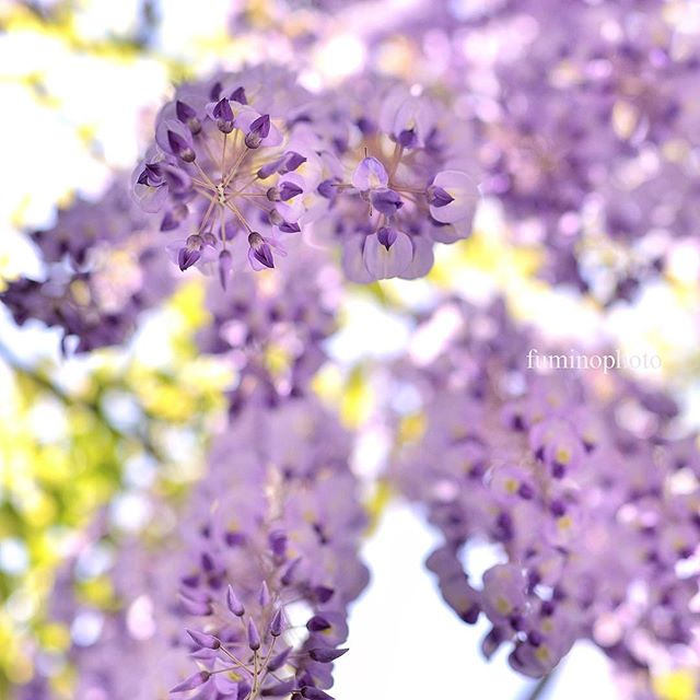 下から見てみる。植物は視点を変えることで新しい表情を見せてくれますね。小さな小花が集まって素敵#special_flower_collections #植物 #植物図鑑 #写真好きな人と繋がりたい #写真撮ってる人と繋がりたい #ザ花部 #TopRankRepost #フォトブートキャンプ#tokyocameraclub #instagram #inspiring_shot #wp_japan #wu_japan