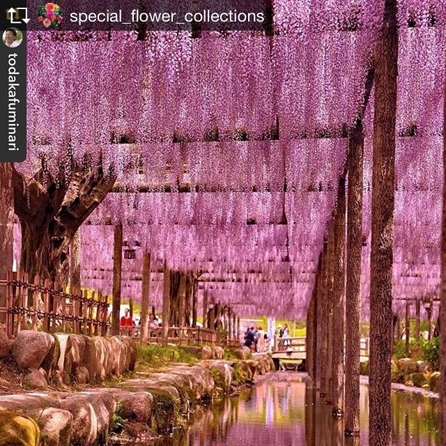 #special_flower_collections さんにフューチャーしていただきました。嬉しくてリポストしています。@special_flower_collections さんありがとうございましたRepost from @special_flower_collections @TopRankRepost #TopRankRepost ------------------------------------</p> 					<div id=