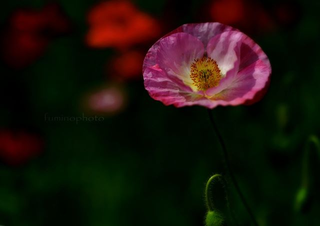 #wp_japan#inspiring_shot#special_flower_collections#flower_special_#wp_flower#tv_flowers#植物 #植物が好き #植物のある暮らし #nikon #写真好きな人と繋がりたい #写真撮ってる人と繋がりたい #はなまっぷ#IG_JAPAN#ef_bluedays#nature_special_#instagramjapan#instagram