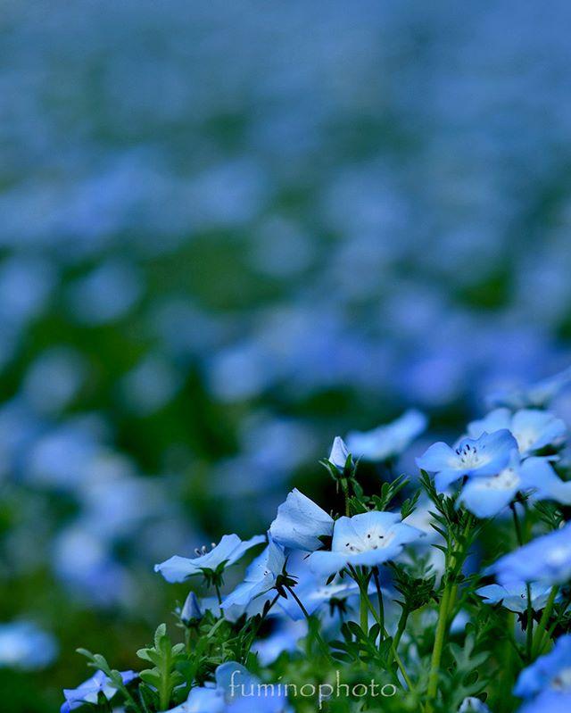 小さなからだに力強さを感じる。花はおおきな感動をいつもあたえてくれます。#wp_japan#inspiring_shot#special_flower_collections#flower_special_#wp_flower#tv_flowers#植物 #植物が好き #植物のある暮らし #nikon #写真好きな人と繋がりたい #写真撮ってる人と繋がりたい #はなまっぷ#IG_JAPAN#ef_bluedays#nature_special_#instagram #lnstagramjapan