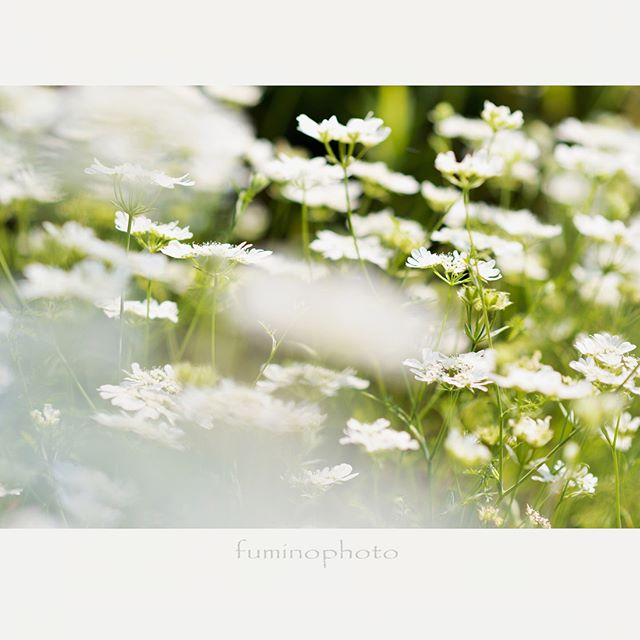 ・・#wp_japan#inspiring_shot#special_flower_collections#flower_special_#wp_flower#tv_flowers#植物 #植物が好き #植物のある暮らし #nikon #写真好きな人と繋がりたい #写真撮ってる人と繋がりたい #はなまっぷ#IG_JAPAN#ef_bluedays#nature_special_#instagramjapan#instagram#ig_garden#garden#花 #花好き #はな#rainbow_petals#東京カメラ部