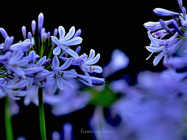#wp_japan#inspiring_shot#special_flower_collections#flower_special_#wp_flower#tv_flowers#植物 #植物が好き #植物のある暮らし #nikon #写真好きな人と繋がりたい #写真撮ってる人と繋がりたい #はなまっぷ#IG_JAPAN#ef_bluedays#nature_special_#instagramjapan#instagram#ig_garden#garden#花 #花好き #はな#rainbow_petals#bara#バラ#rose#東京カメラ部#ip_blossoms