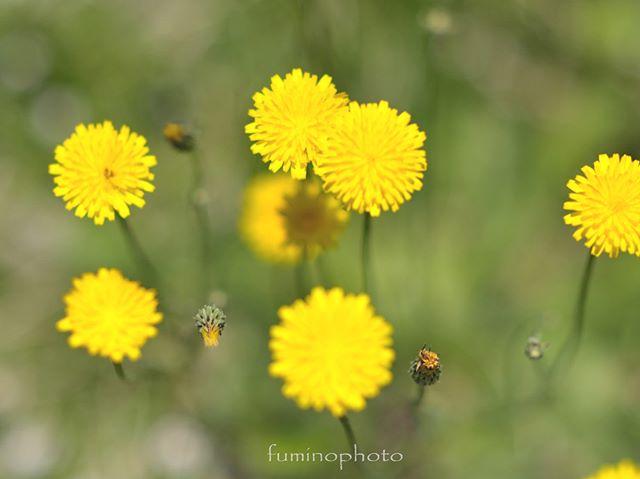 #inspiring_shot#special_flower_collections#flower_special_#wp_flower#tv_flowers#植物 #植物が好き #植物のある暮らし #nikon #写真好きな人と繋がりたい #写真撮ってる人と繋がりたい #はなまっぷ#IG_JAPAN#ef_bluedays#nature_special_#instagramjapan#instagram#ig_garden#garden#花 #花好き #はな#rainbow_petals#bara#バラ#rose