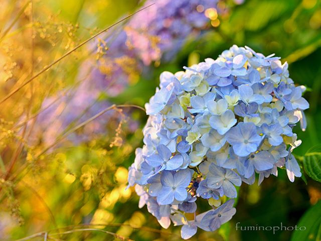 #wp_japan#inspiring_shot#special_flower_collections#flower_special_#wp_flower#tv_flowers#植物 #植物が好き #植物のある暮らし #nikon #写真好きな人と繋がりたい #写真撮ってる人と繋がりたい #はなまっぷ#IG_JAPAN#ef_bluedays#nature_special_#instagramjapan#instagram#ig_garden#garden#花 #花好き #はな#rainbow_petals#フォトコミュ#フォトブートキャンプ#フォトブートキャンプ31 #フォトブートキャンプ03