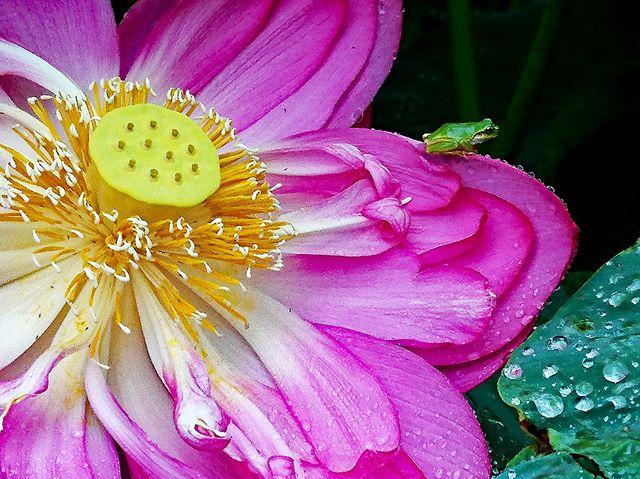 #wp_japan#inspiring_shot#special_flower_collections#flower_special_#wp_flower#tv_flowers#植物 #植物が好き #植物のある暮らし #写真好きな人と繋がりたい #写真撮ってる人と繋がりたい #はなまっぷ#IG_JAPAN#ef_bluedays#nature_special_#instagramjapan#instagram#ig_garden#garden#花 #花好き #はな#rainbow_petals#東京カメラ部#ip_blossoms#フォトコミュ#ts_niwa