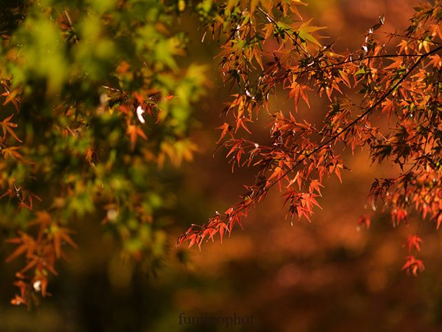 #team_jp_#東京カメラ部#lovers_nippon#写真好きな人と繋がりたい#写真撮ってる人と繋がりたい#植物が好き#私の花の写真館#loves_nippon#ig_japan#キタムラ写真投稿#ptk_japan#japan_daytime_view#phos_japan#wp_japan#excellent_nature#fabulous_shots#explore_dof_#photo_shorttrip#tokyocameraclub#daily_photo_jpn#photo_jpn#nature_special_#jaran_asobi#jp_gallery#フォトコミュ#tv_flowers#loves_garden