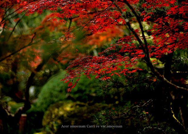 #wp_japan#inspiring_shot#special_flower_collections#flower_special_#wp_flower#tv_flowers#植物 #植物が好き#植物のある暮らし#写真好きな人と繋がりたい#写真撮ってる人と繋がりたい#IG_JAPAN#ef_bluedays#nature_special_#instagramjapan#instagram#ig_garden#garden#花#rainbow_petals#東京カメラ部#ip_blossoms#キタムラ写真投稿#フォトコミュ