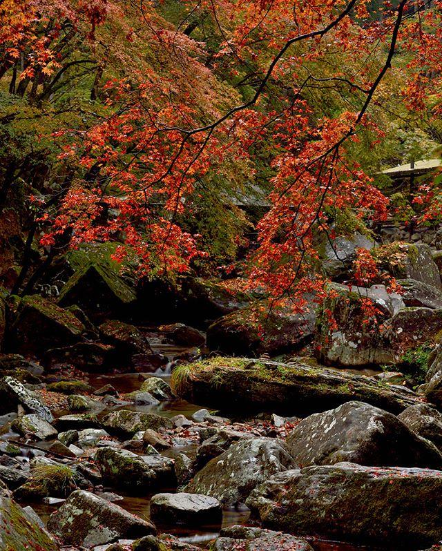 #team_jp_flower#東京カメラ部#lovers_nippon#写真好きな人と繋がりたい#写真撮ってる人と繋がりたい#植物が好き#loves_nippon#ig_japan#キタムラ写真投稿#ptk_japan#japan_daytime_view#phos_japan#wp_japan#excellent_nature#fabulous_shots#explore_dof_#photo_shorttrip#tokyocameraclub#daily_photo_jpn#photo_jpn#nature_special_#jaran_asobi#jp_gallery#フォトコミュ#tv_flowers#loves_garden#wp_japan#inspiring_shot#IG_JAPAN#instagramjapan#instagram