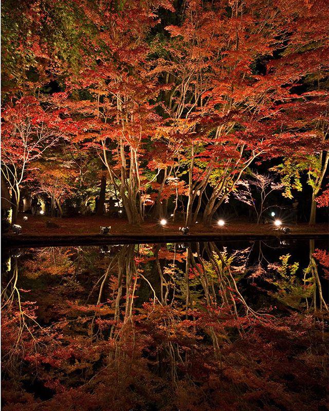なぜか水面の方が綺麗に写る?#ig_garden #ts_niwa