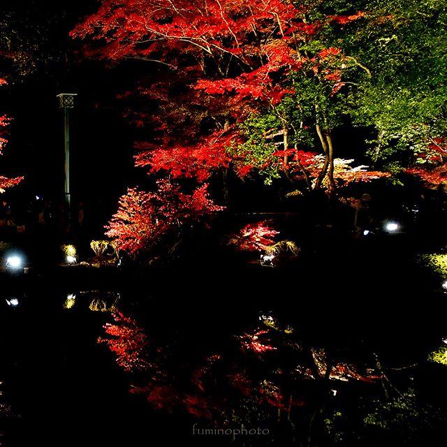 #リフレクション#もみじ#team_jp_秋色2017#retrip_nippon #はなまっぷ紅葉2017#phos_japan#instagramjapan#amazing_longexpo#s_shot#longexposure_shots#longexposure_japan#bestjapanpics#awesome_photographers#nightphotography#retrip_news#IGersJP#awesome_earth#東京カメラ部#lovers_nippon#写真好きな人と繋がりたい#写真撮ってる人と繋がりたい#植物が好#IG_JAPAN#instagramjapan#キタムラ写真投稿#フォトコミュ#Pashadelic
