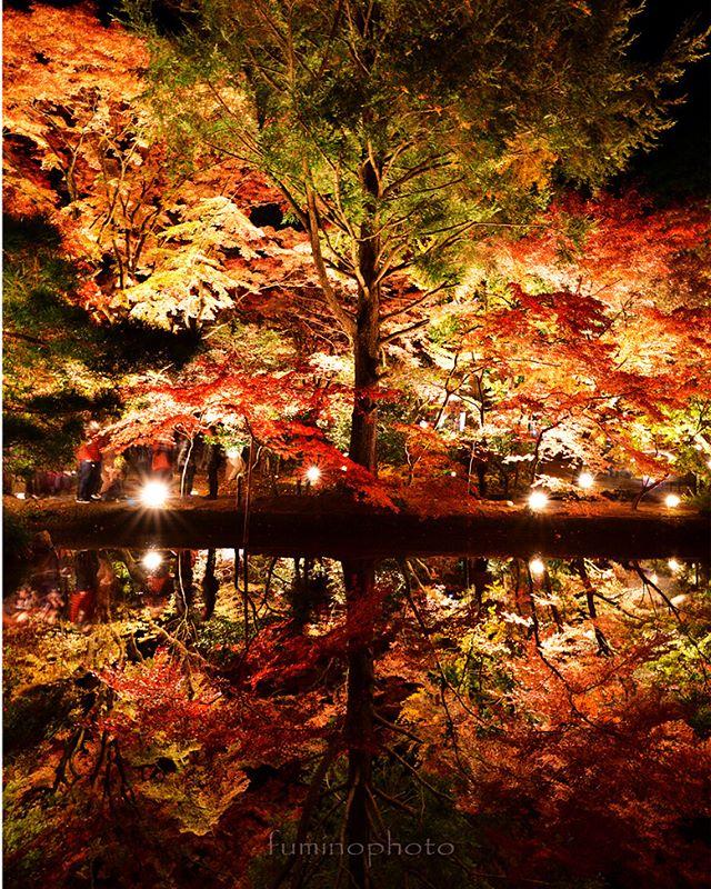 #リフレクション#もみじ#team_jp_秋色2017 #instagram#autumn#retrip_nippon #はなまっぷ紅葉2017#phos_japan#instagramjapan#amazing_longexpo#s_shot#longexposure_shots#longexposure_japan#bestjapanpics#awesome_photographers#nightphotography#retrip_news#IGersJP#awesome_earth#東京カメラ部#lovers_nippon#写真好きな人と繋がりたい#写真撮ってる人と繋がりたい#植物が好#IG_JAPAN#instagramjapan#キタムラ写真投稿#フォトコミュ