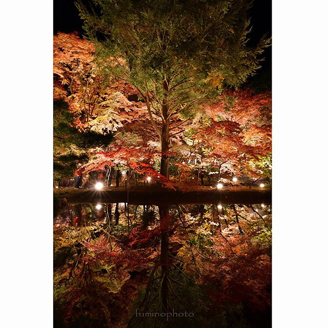 D850すごいカメラ^^感動しました!#リフレクション#もみじ#team_jp_秋色2017 #instagram#autumn#retrip_nippon#はなまっぷ紅葉2017#phos_japan#instagramjapan#amazing_longexpo#s_shot#longexposure_shots#longexposure_japan#bestjapanpics#awesome_photographers#nightphotography#retrip_news#IGersJP#awesome_earth#東京カメラ部#lovers_nippon#写真好きな人と繋がりたい#写真撮ってる人と繋がりたい#植物が好#IG_JAPAN#instagramjapan#キタムラ写真投稿#フォトコミュ