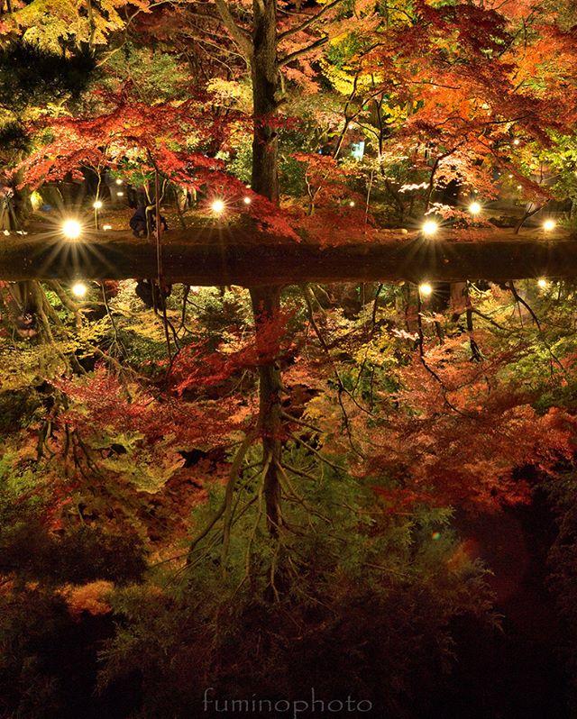 別PICの再現象でチャレンジ!今日は雨。夜にはやむかも!でも明日がライトアップ最終日。延長はないのかなぁ#リフレクション#もみじ#team_jp_秋色2017 #instagram#autumn#retrip_nippon #はなまっぷ紅葉2017#phos_japan#instagramjapan#amazing_longexpo#s_shot#longexposure_shots#longexposure_japan#bestjapanpics#awesome_photographers#nightphotography#retrip_news#IGersJP#awesome_earth#東京カメラ部#lovers_nippon#写真好きな人と繋がりたい#写真撮ってる人と繋がりたい#植物が好#IG_JAPAN#instagramjapan#キタムラ写真投稿#フォトコミュ