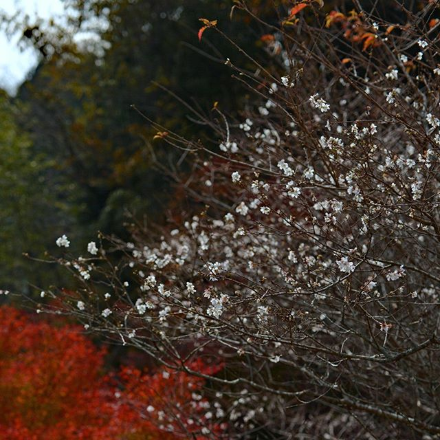 #instagramjapan#amazing_longexpo#s_shot#longexposure_shots#longexposure_japan#bestjapanpics#awesome_photographers#nightphotography#retrip_news#IGersJP#awesome_earth#東京カメラ部#lovers_nippon#写真好きな人と繋がりたい#写真撮ってる人と繋がりたい#植物が好#IG_JAPAN#instagramjapan#キタムラ写真投稿#フォトコミュ#Pashadelic#dairy_photo_jpn #ig_japan #Lovers_Nippon #icu_japan #japan_of_insta #team_jp_ #bestjapanpics #visitjapanjp #東京カメラ部 #tokyocameraclub#pc投稿テスト