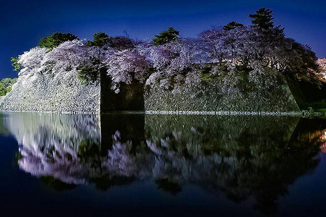 桜の花がヒラヒラと散りはじめてきました。今年は長く長く楽しませてくれてありがとう。 花粉の大量攻撃にやられています。ずっと天気が良くて 花粉も強力 #名古屋城 #写真好きな人と繋がりたい #写真撮ってる人と繋がりたい#はなまっぷ桜2018 #フォトコミュ #キタムラ写真投稿 #東京カメラ部 #tokyocameraclub #リフレクション