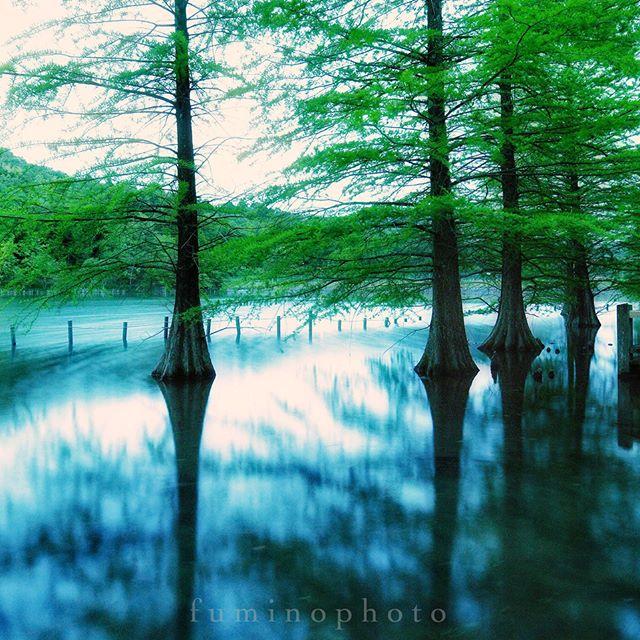 近所の公園にも素敵な景色があります^^ #wp_japan#inspiring_shot#tv_flowers#植物 #植物が好き#植物のある暮らし#写真好きな人と繋がりたい#写真撮ってる人と繋がりたい#IG_JAPAN#nature_special_#instagramjapan#ig_garden#garden#rainbow_petals#東京カメラ部#ip_blossoms#フォトコミュ#IGersjp #photography#wp_flower #Japan_daytime_view#ig_global_life #hello_worldpics #igbsfeatures #igglobalclubhdr #globaldaily #big_shotz #dream_image #ig_photostars