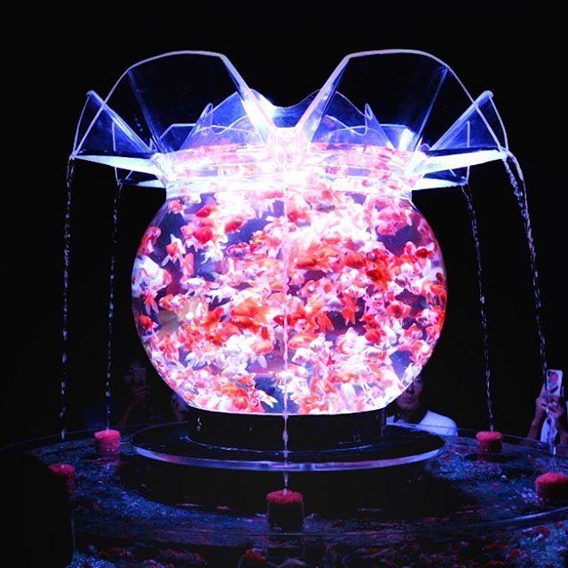 #アクアリューム #アクアリウム #goldfish #ig_japan #icu_japan #写真撮ってる人と繋がい #写真好きな人と繋がりたい #nikon #d850 #フォトコミュ #フォトブートキャンプ #金魚 #金魚アートアクアリウム #artaquarium #aqaurium #ts_niwa #tokyocameraclub