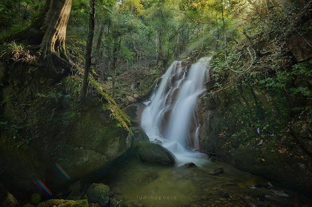 #garden #滝 #waterfall #japanesegarden #写真好きな人と繋がりたい #写真撮ってる人と繋がりたい #tokyocameraclub #フォトコミュ #フォトブートキャンプ #ティーズガーデンスクール