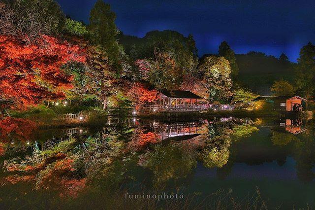 #紅葉2018 #紅葉祭り #もみじ #maple #maples #mapleleaf #autumn #nature #orange #autumnleaves #東山植物園ライトアップ #写真好きな人と繋がりたい #tokyocameraclub #写真撮ってる人と繋がりたい #東山動物園 #reflection  #reflectiongram #リフレクション #ts_niwa#フォトコミュ #フォトブートキャンプ