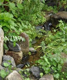 川の流れビオトープ