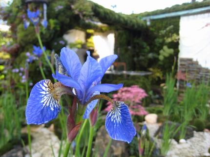 世界一の庭を目指して咲く花